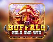 Buffalo Hold and Win